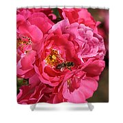Flowers-roses-pink-bee Shower Curtain