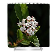 Flowers-tiny White Shower Curtain