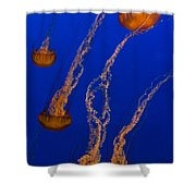 Flowing Pacific Sea Nettles 3 Shower Curtain