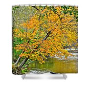 Flowing River Leaning Tree Shower Curtain