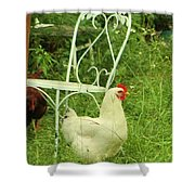 Fluffy Chicken Shower Curtain