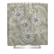 Fluffy Dandelions  Shower Curtain