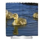 Fluffy Floaters  Shower Curtain