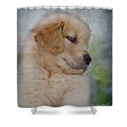 Fluffy Golden Puppy Shower Curtain by Susan Candelario