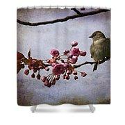 Fluffy Sparrow  Shower Curtain