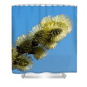 Fluffy Spring - 1 - Featured 3 Shower Curtain