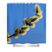 Fluffy Spring - 3 - Featured 3 Shower Curtain