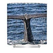 Flukes Of A Sperm Whale 2 Shower Curtain by Heiko Koehrer-Wagner