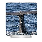 Flukes Of A Sperm Whale 2 Shower Curtain