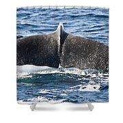 Flukes Of A Sperm Whale Shower Curtain