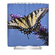 Fluted Swallowtail Shower Curtain