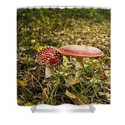Fly Amanita Shower Curtain