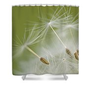Fly Away Shower Curtain by Anne Gilbert