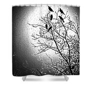 Fly Away Home2 Shower Curtain