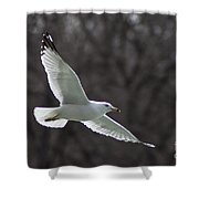 Fly Be Free Shower Curtain