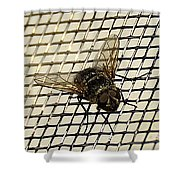 Fly From The Series The Imprint Of Man In Nature Shower Curtain
