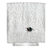 Fly On A Wall Shower Curtain