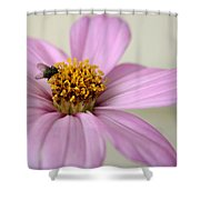Fly Time  Shower Curtain