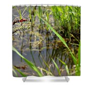 Fly United 2 Shower Curtain