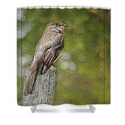 Flycatcher In Southern Missouri Shower Curtain