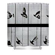 Flying Bird Shower Curtain by Eadweard Muybridge