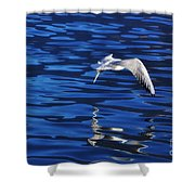 Flying Bird Shower Curtain