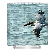 Flying Brown Pelican  Shower Curtain