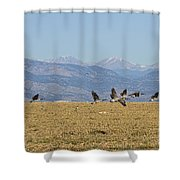 Flying Canadian Geese Colorado Rocky Mountains 1 Shower Curtain