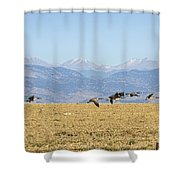 Flying Canadian Geese Rocky Mountains 2 Shower Curtain