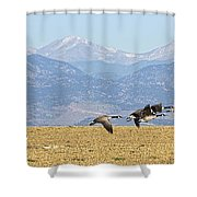 Flying Canadian Geese Rocky Mountains Panorama 2 Shower Curtain