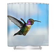 Flying Costa's Shower Curtain
