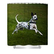 Flying Crazy Dog. Kokkie. Dalmation Dog Shower Curtain