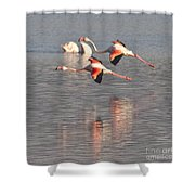 Flying Flamingos Shower Curtain