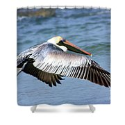 Flying Florida Pelican Shower Curtain