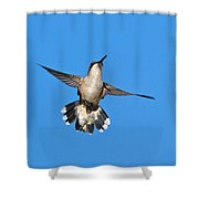 Flying Hummingbird Against Blue Sky Shower Curtain