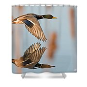 Skimming The Pond Through Cattails Shower Curtain
