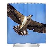 Flying Osprey Shower Curtain