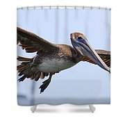 Flying Pelican Panorama Shower Curtain