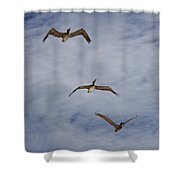 Flying Pelicans Shower Curtain