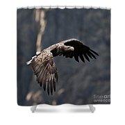 Flying Sea Eagle  Shower Curtain