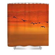 Flying South  Shower Curtain