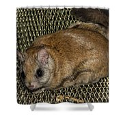 Flying Squirrel On The Feeder Shower Curtain