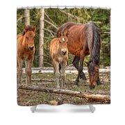 Foal Spot Shower Curtain