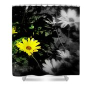 Focus On 2 Yellow Daisies Shower Curtain