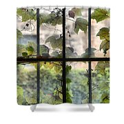 Fog Ivy And Plate Glass Shower Curtain
