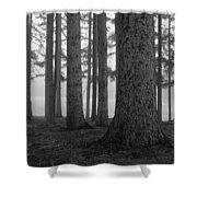 Fog Within The Pines  Bw Shower Curtain
