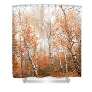 Foggy Autumn Aspens Shower Curtain
