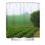 Foggy Bean Field Shower Curtain