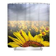Foggy Field Of Sunflowers Shower Curtain