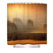 Foggy Morning Pasture Time Shower Curtain
